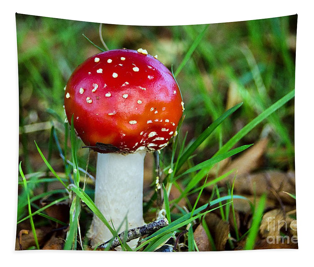 Amanita Muscaria Tapestry featuring the photograph Amanita Muscaria by Susie Peek