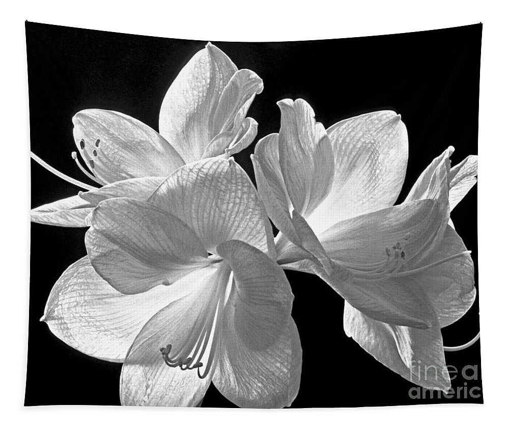 Amaryllis Tapestry featuring the photograph Amaryllis - Bw by Paul W Faust - Impressions of Light