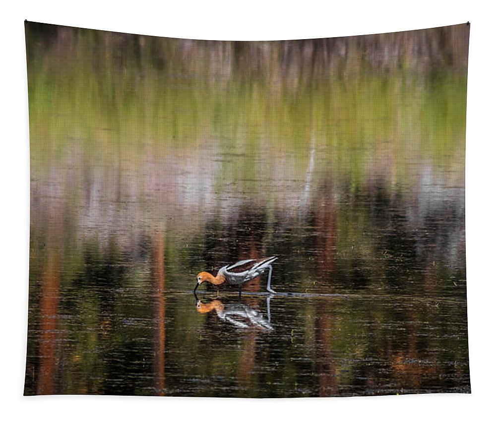American Avocet Tapestry featuring the photograph American Avocet 2 by Mitch Shindelbower