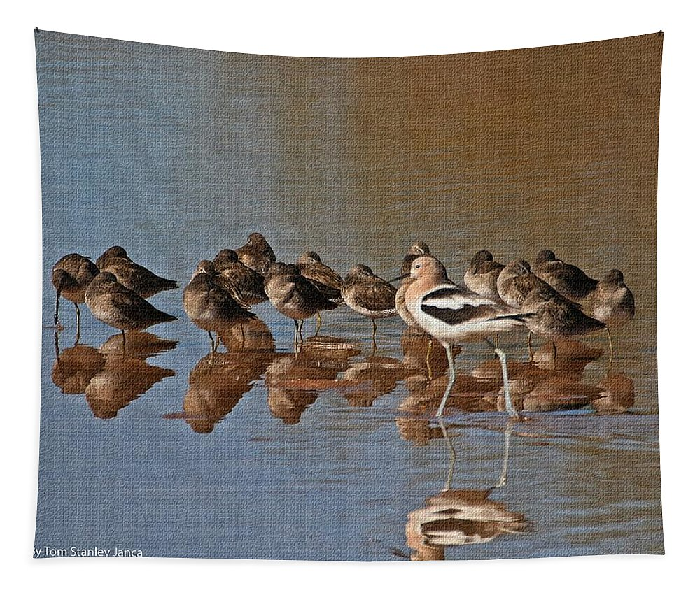 American Avocet Tapestry featuring the photograph American Avocet And Sleeping Dowitchers by Tom Janca