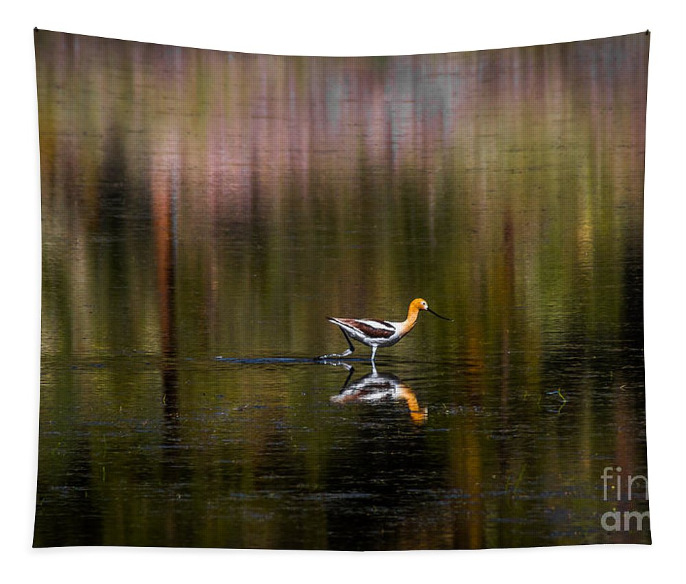 American Avocet Tapestry featuring the photograph American Avocet by Mitch Shindelbower