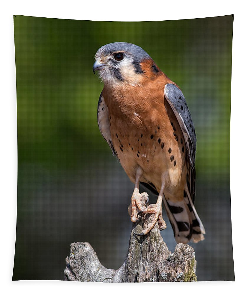 American Kestrel Tapestry featuring the photograph American Kestrel by Dale Kincaid