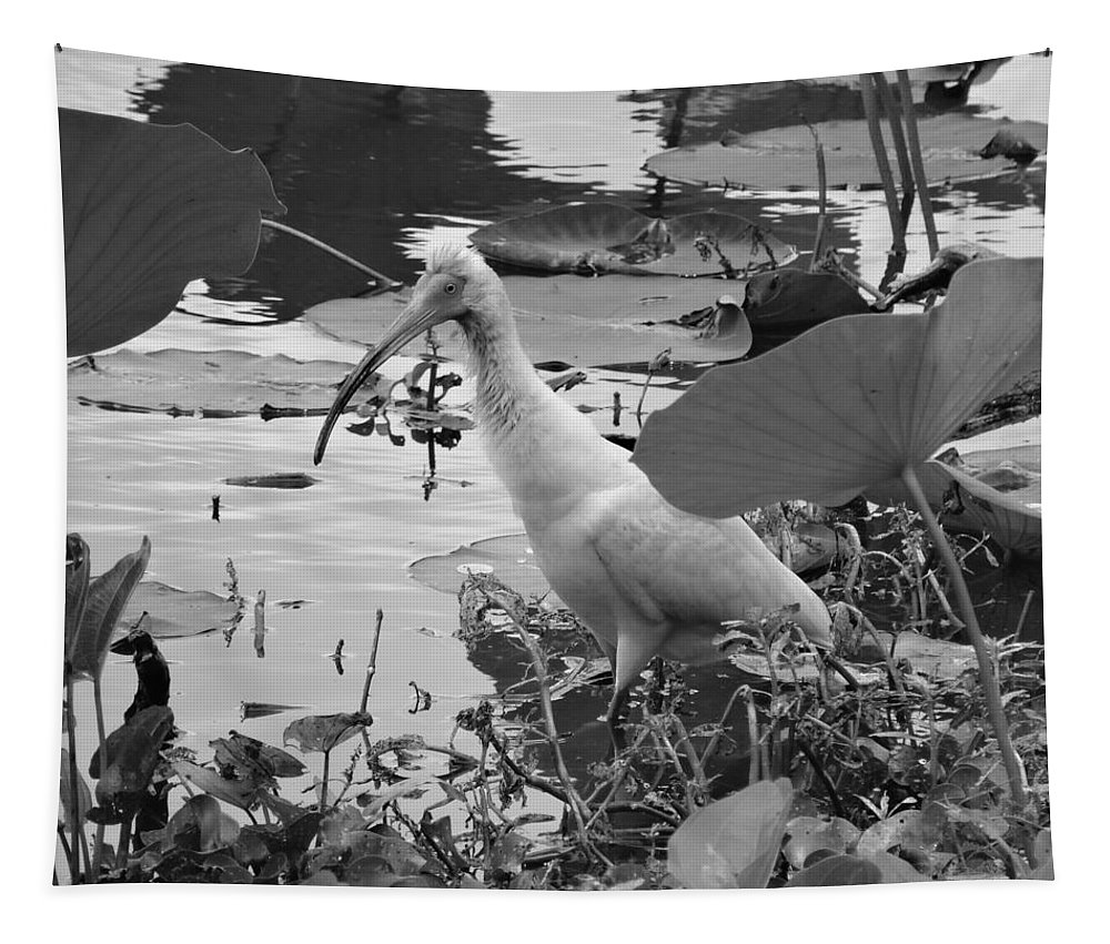 American White Ibis Black And White Tapestry featuring the photograph American White Ibis Black And White by Dan Sproul