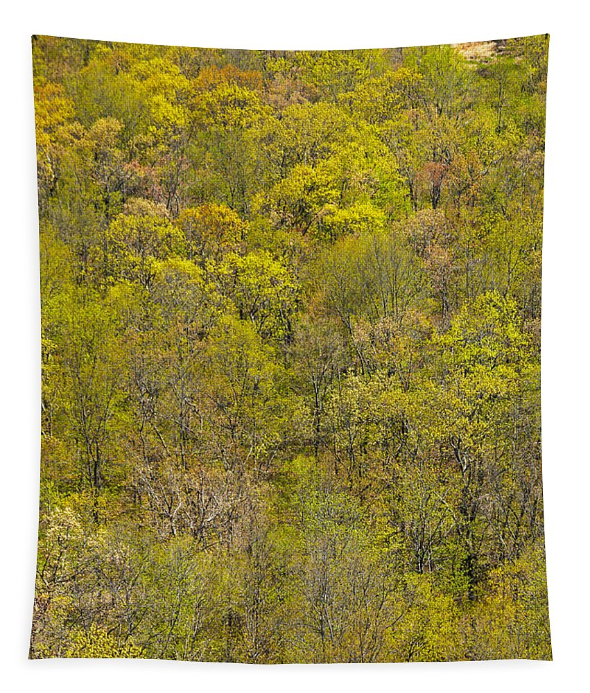 Trees Tapestry featuring the photograph Among The Trees by Karol Livote