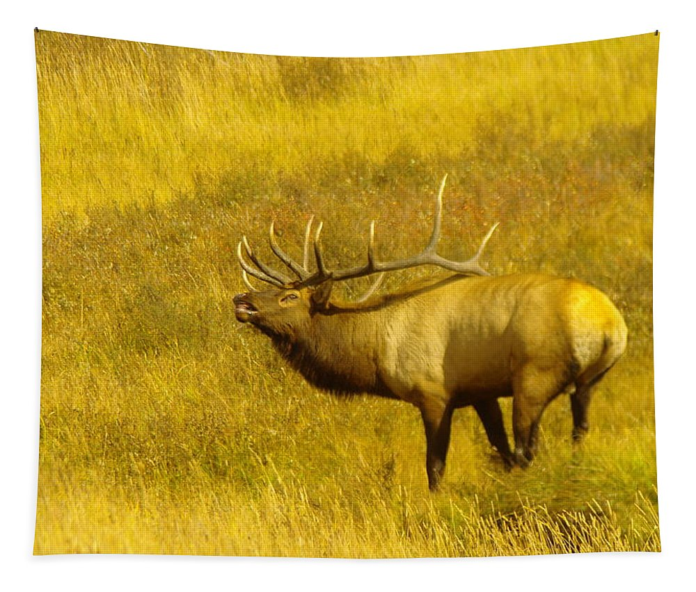 Elk Tapestry featuring the photograph An Angry Snarl by Jeff Swan