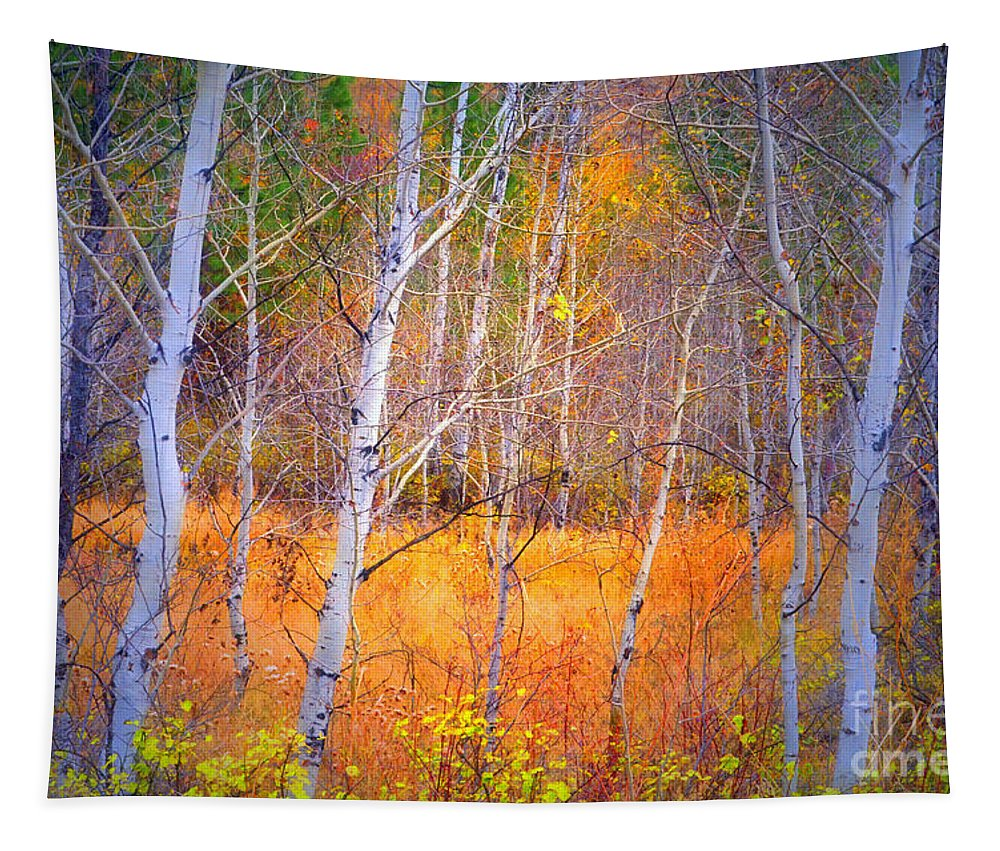 Autumn Tapestry featuring the photograph An Autumn Symphony Of Colour by Tara Turner
