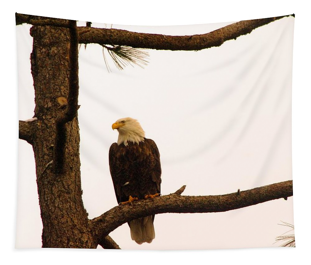 Eagles Tapestry featuring the photograph An Eagle Day Dreaming by Jeff Swan