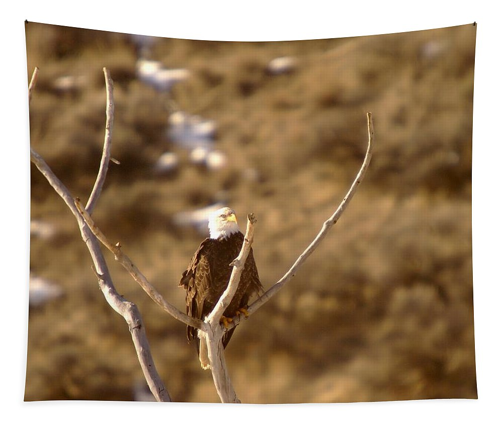 Eagles Tapestry featuring the photograph An Eagle Day Dreams by Jeff Swan