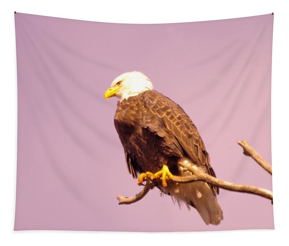 Eagle Tapestry featuring the photograph An Eagle Hanging Out by Jeff Swan