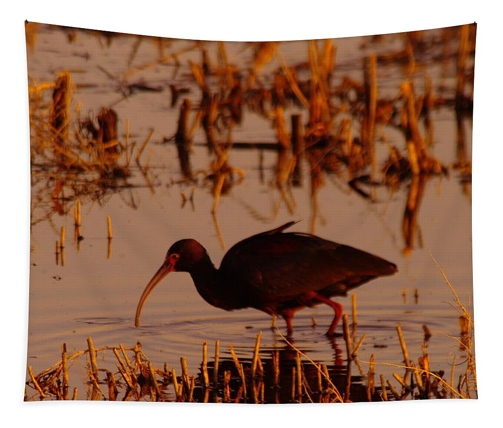 Birds Tapestry featuring the photograph An Ibis Feeding by Jeff Swan