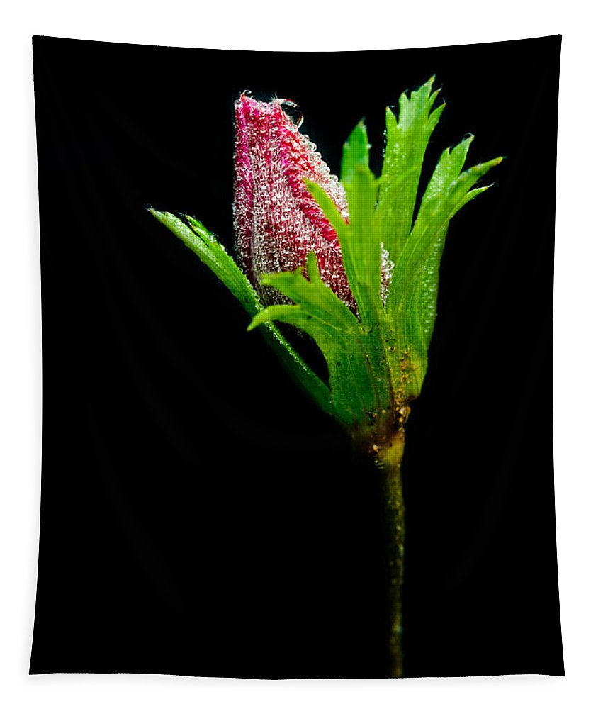 Flower Tapestry featuring the photograph Anemone Flower Details by Michalakis Ppalis