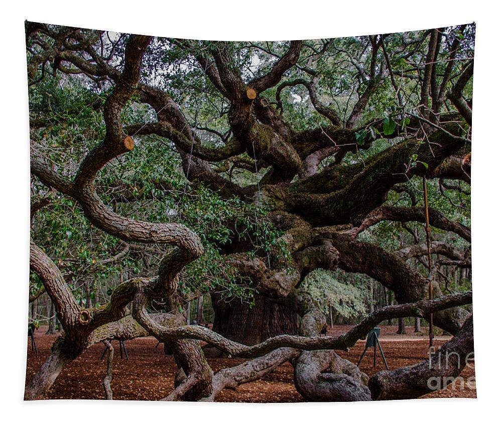 Angel Oak Tree Tapestry featuring the photograph Angel Oak Tree Treasure by Dale Powell