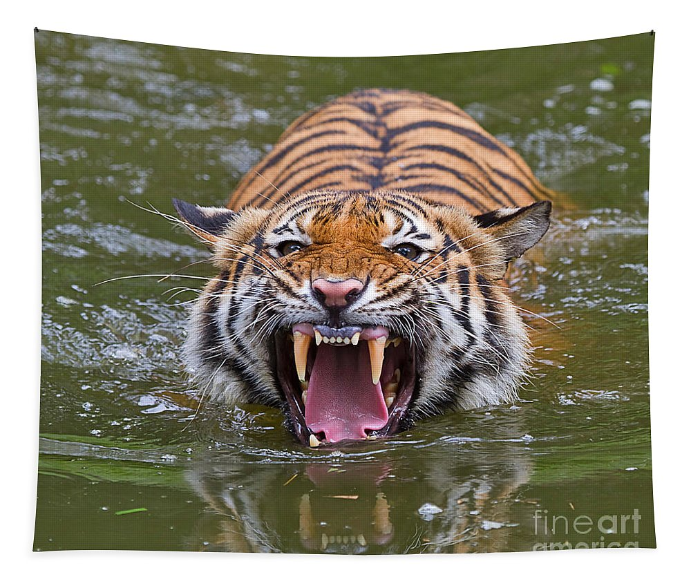 Animal Tapestry featuring the photograph Angry Tiger by Louise Heusinkveld