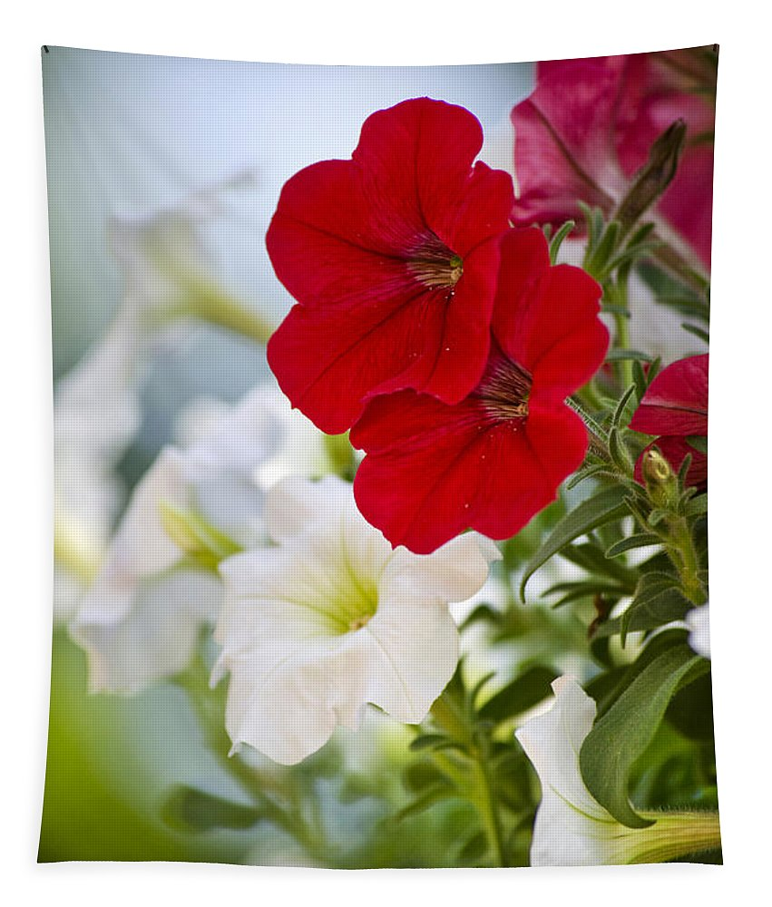 Petunias Tapestry featuring the photograph Antique Petunia Flowers by Christina Rollo