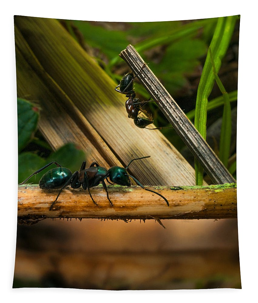 Ant Tapestry featuring the photograph Ants Adventure 2 by Bob Orsillo