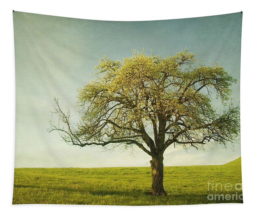 Appletree Tapestry featuring the photograph Appletree by Priska Wettstein