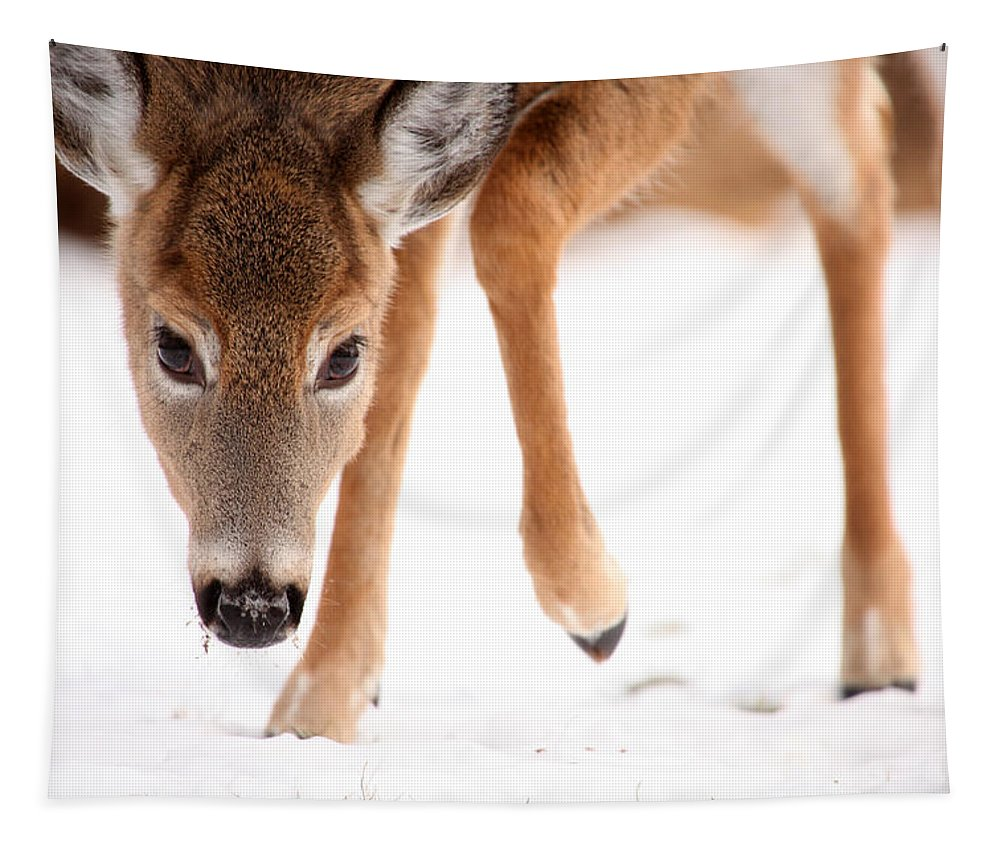 Deer Tapestry featuring the photograph Approaching by Karol Livote