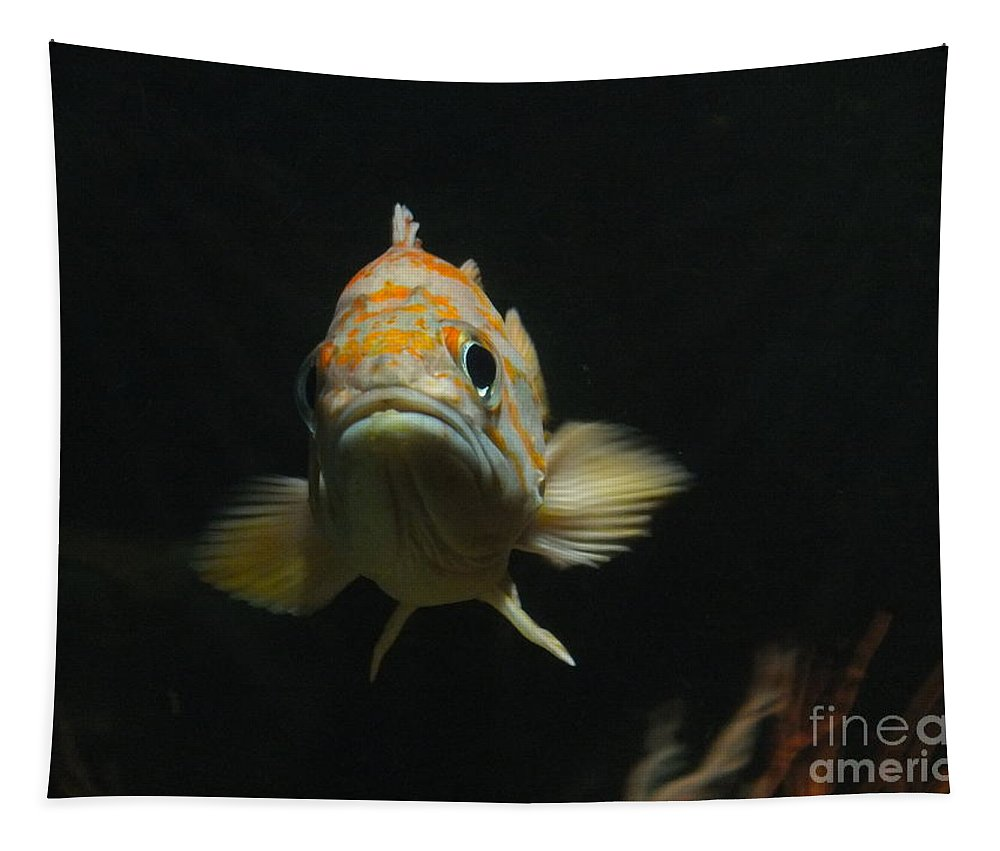 Fish Tapestry featuring the photograph Are You Looking At Me? by Yenni Harrison