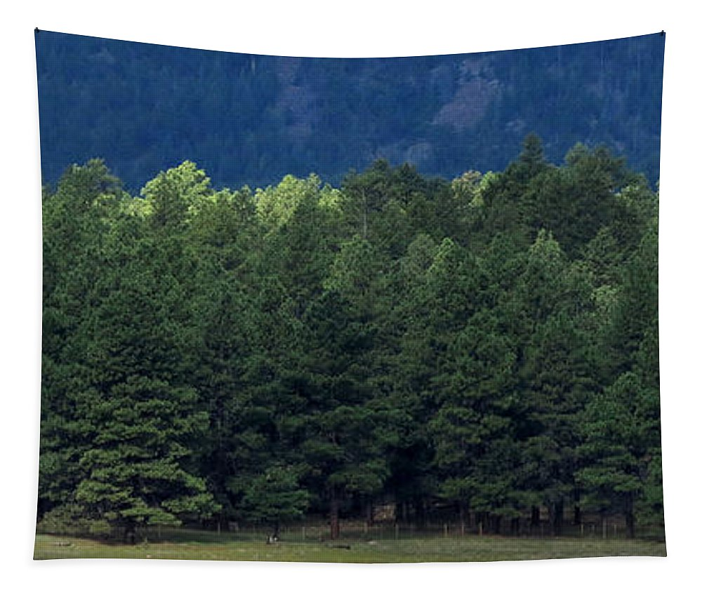 Nature Tapestry featuring the photograph Arizona Forest by Laurel Powell