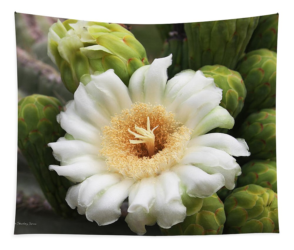Arizona State Flower Tapestry featuring the photograph Arizona State Flower The Saguaro Blossom by Tom Janca