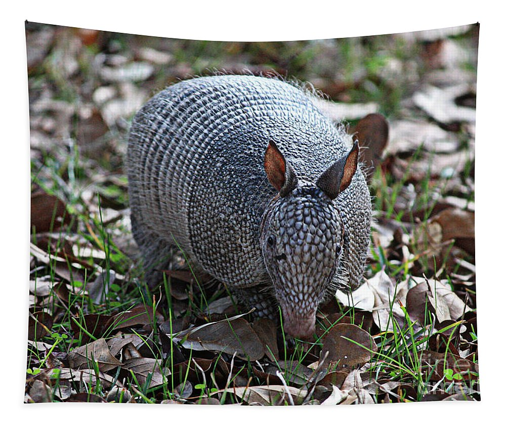 Armadillo Tapestry featuring the photograph Armadillo Closeup by Carol Groenen