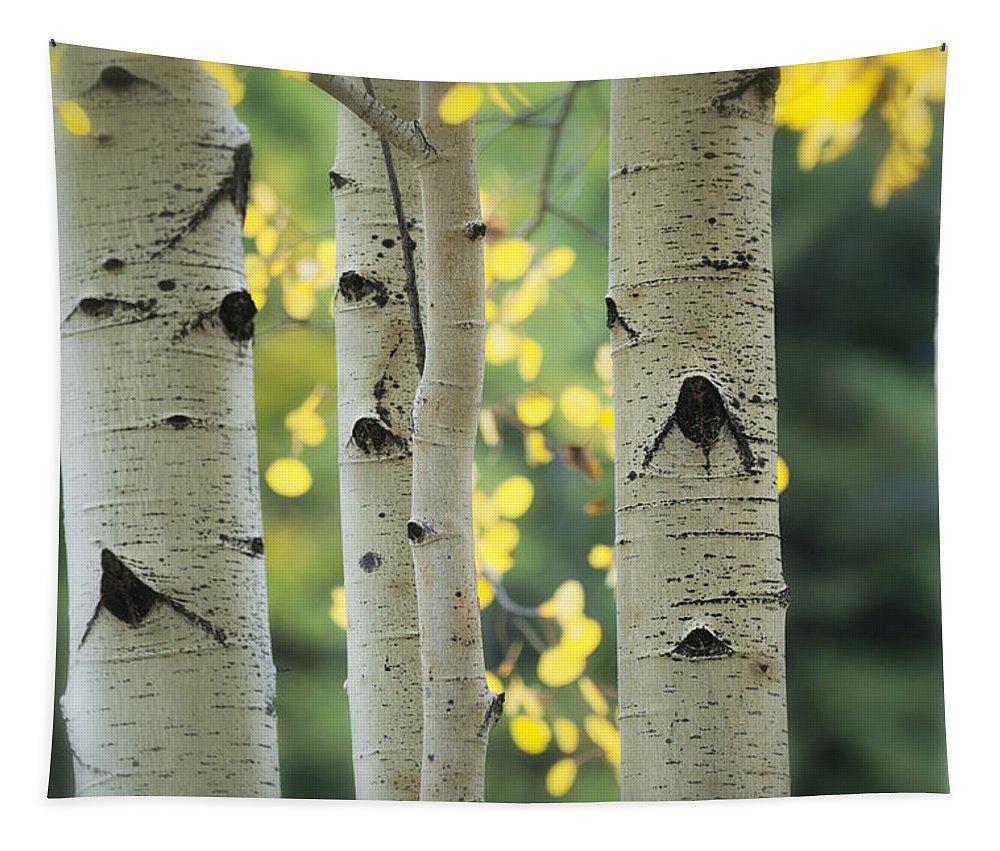Aspen Trees Tapestry featuring the photograph As Autumn Arrives by Saija Lehtonen
