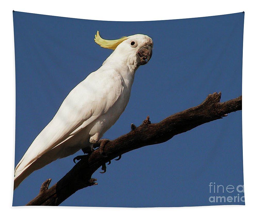 Bird Tapestry featuring the photograph Australian Bird by Ben Yassa