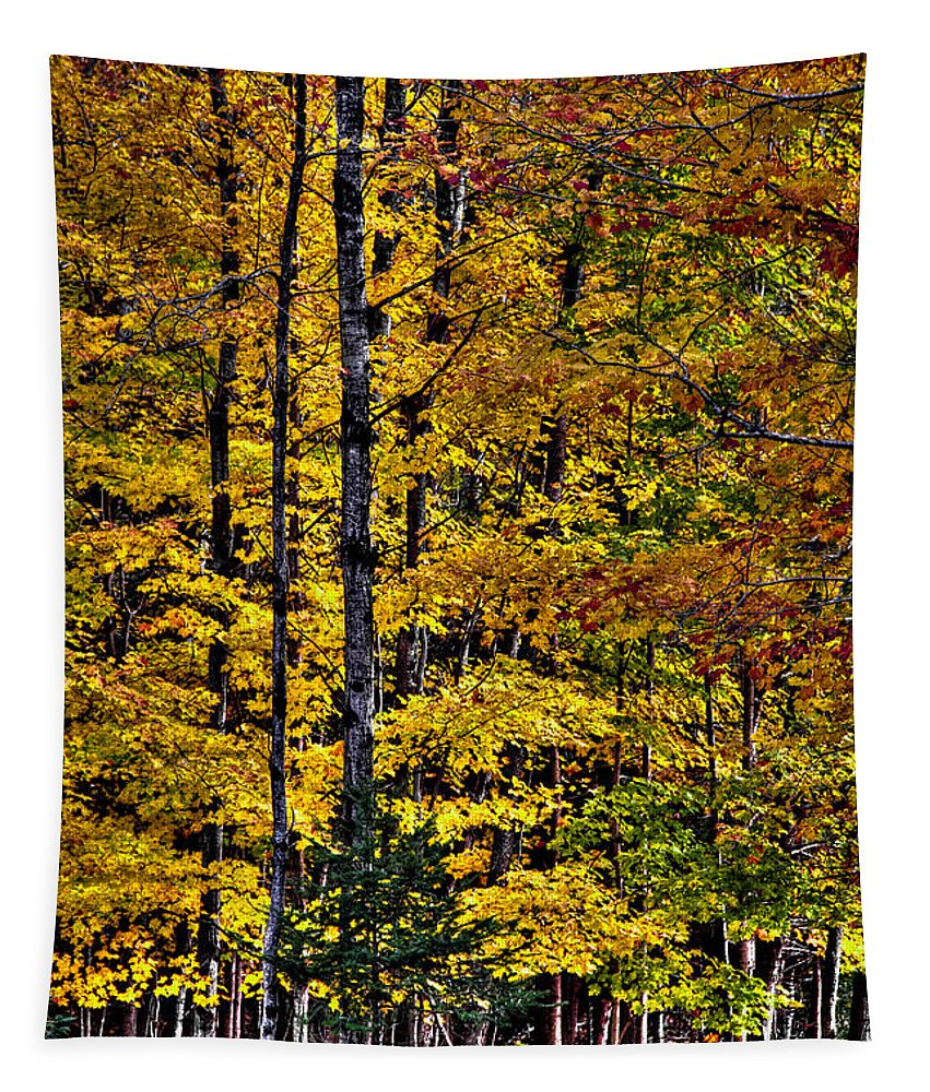 Adirondack's Tapestry featuring the photograph Autumn At Eagle Bay by David Patterson
