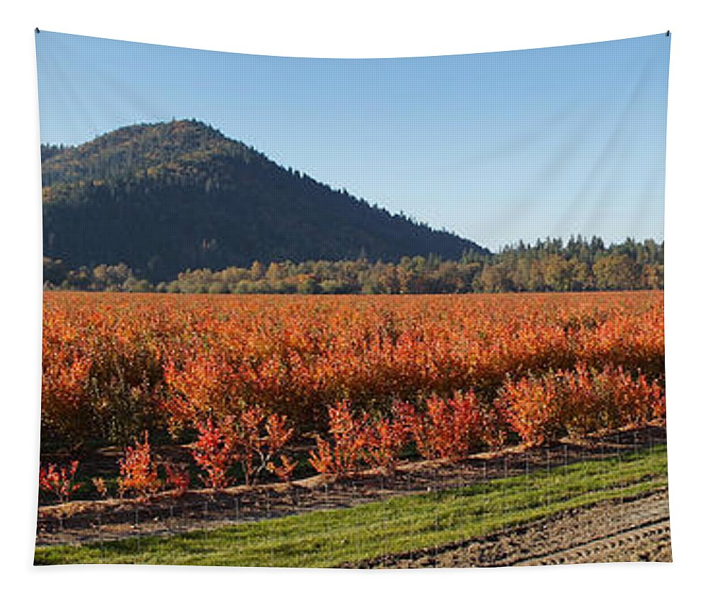 Panorama Tapestry featuring the photograph Autumn Blueberry Panorama by Mick Anderson
