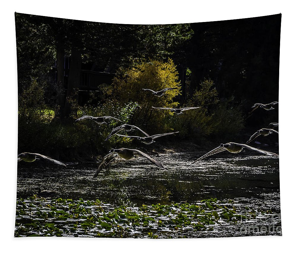 Autumn Flight Tapestry featuring the photograph Autumn Flight by Mitch Shindelbower