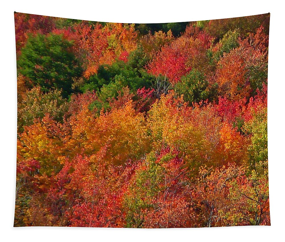 Autumn Tapestry featuring the photograph Autumn Forest by Aimee L Maher ALM GALLERY