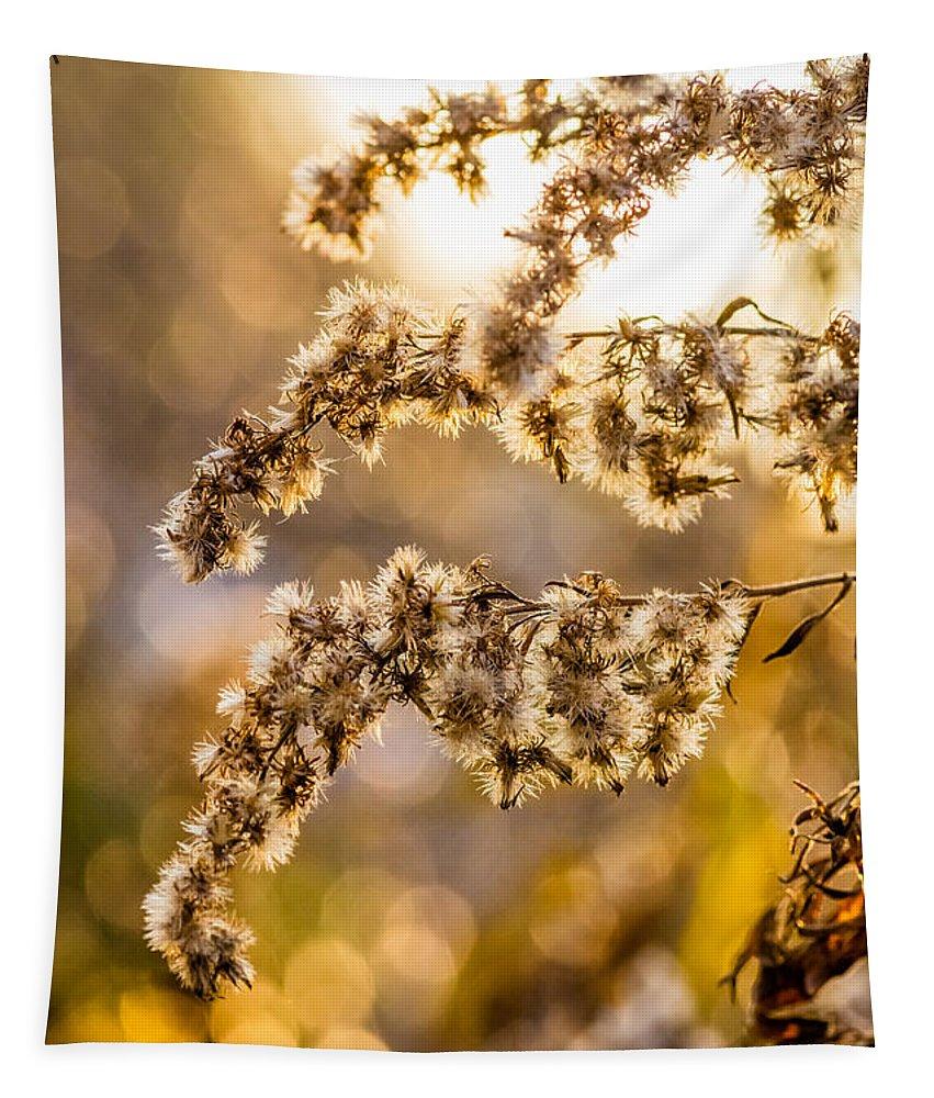 Steve Harrington Tapestry featuring the photograph Autumn Goldenrod by Steve Harrington
