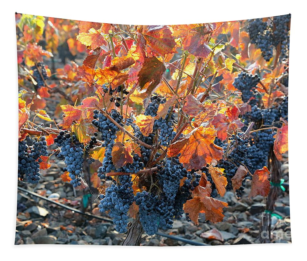 Autumn Grapes Tapestry featuring the photograph Autumn Grapes by Carol Groenen