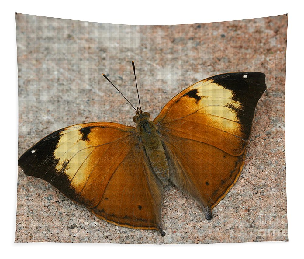 Butterfly Tapestry featuring the photograph Autumn Leaf Butterfly by Judy Whitton