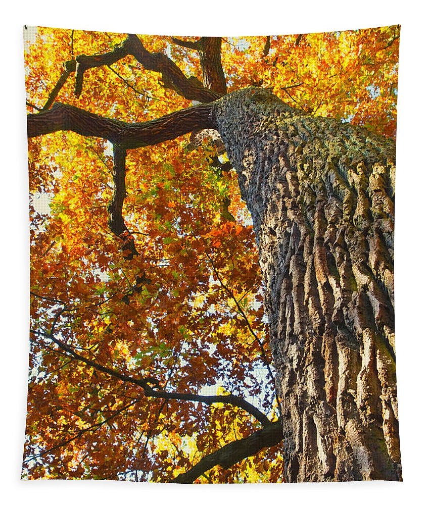 Autumn Tapestry featuring the photograph Autumn Oak by Jaroslav Frank