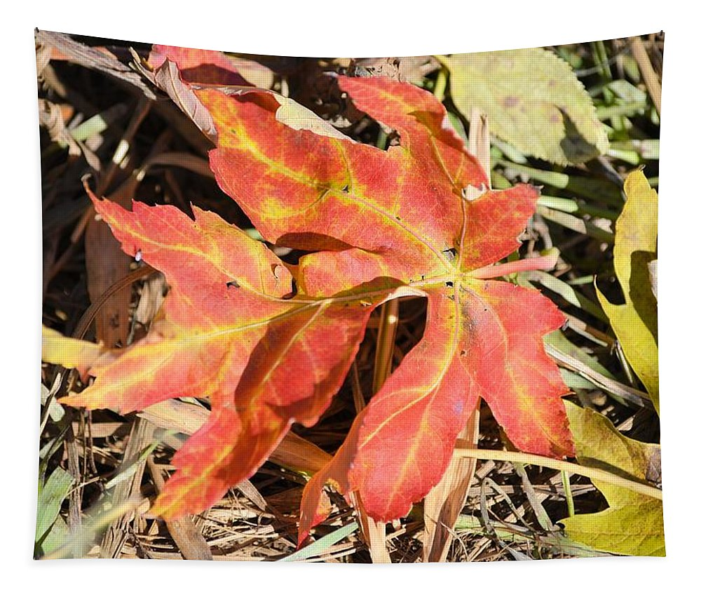 Leaf Tapestry featuring the photograph Autumn Red by Bonfire Photography