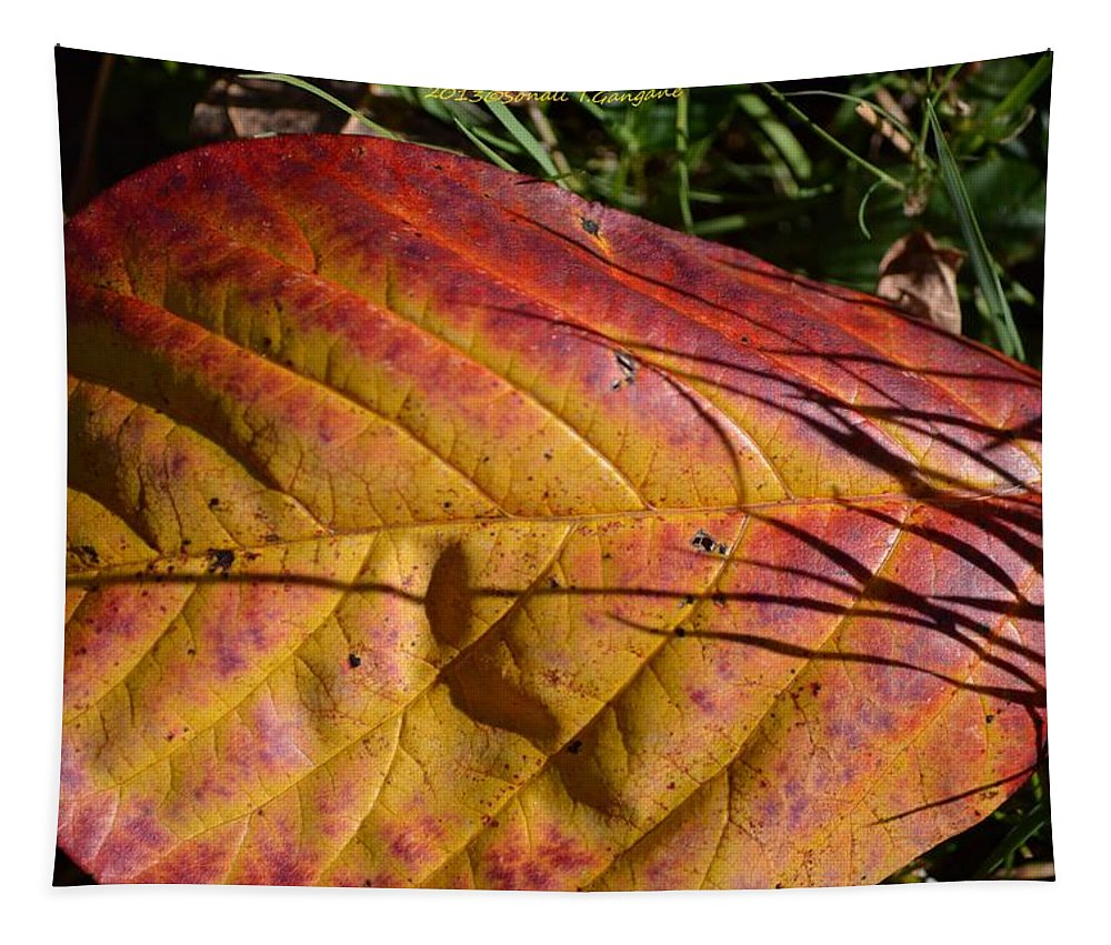 Autumn Tapestry featuring the photograph Autumn Saga by Sonali Gangane