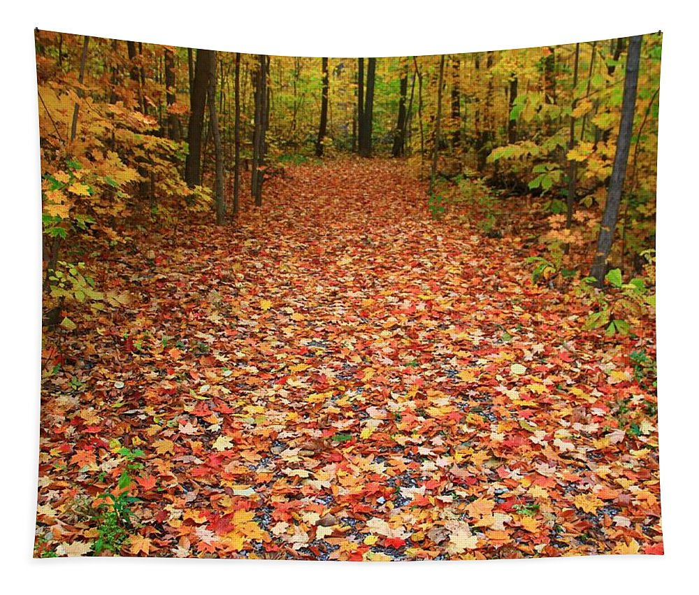 Autumn Walk In Ohio Tapestry featuring the photograph Autumn Walk In Ohio by Dan Sproul