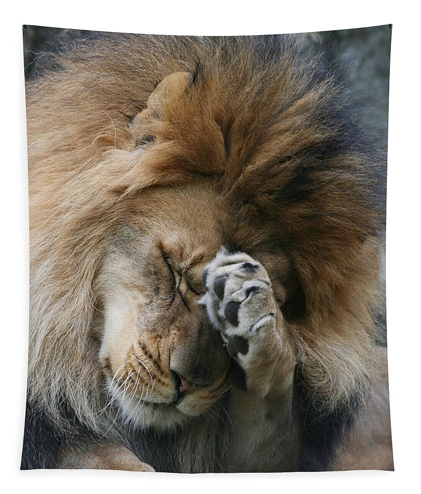 Lion Tapestry featuring the photograph Awwwww..... by Judy Whitton