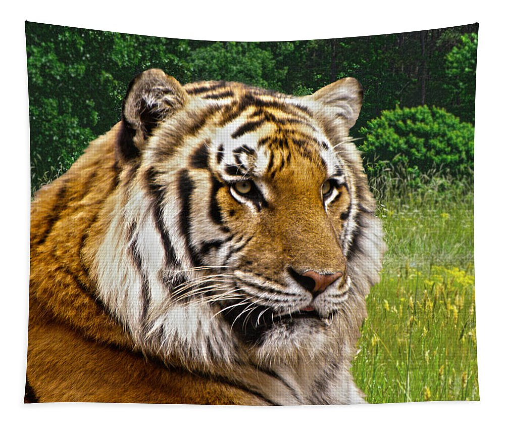 Tiger Tapestry featuring the photograph Axl's Portrait by Sandi OReilly