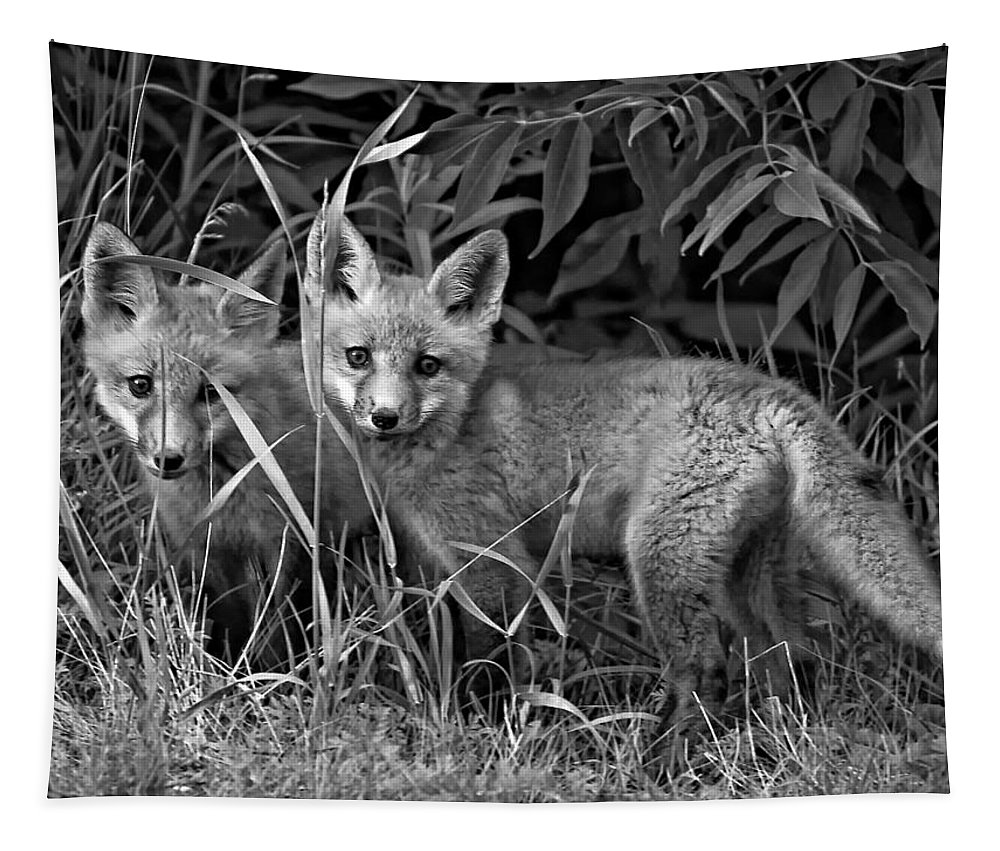 Wildlife Tapestry featuring the photograph Babes In The Woods Monochrome by Steve Harrington