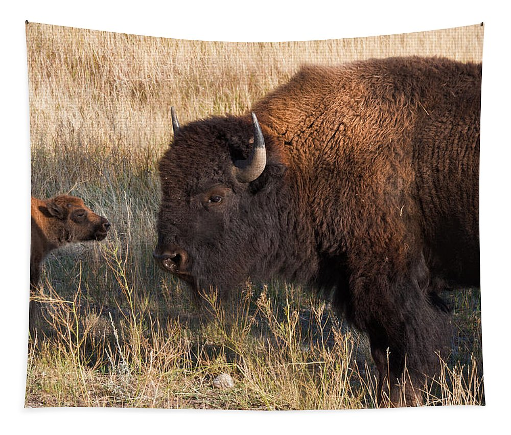 Bison Tapestry featuring the photograph Baby Bison Meets Daddy by Kathleen Bishop