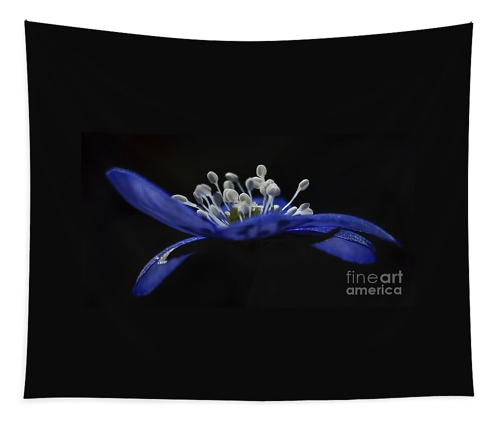 Festblues Tapestry featuring the photograph Baby Blues.. by Nina Stavlund
