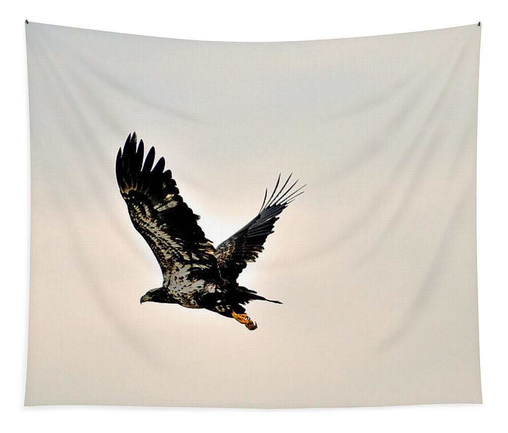 Baby Tapestry featuring the photograph Baby Eagle Flying By by Davids Digits