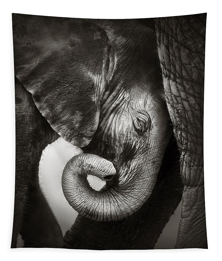 Elephant Tapestry featuring the photograph Baby Elephant Seeking Comfort by Johan Swanepoel