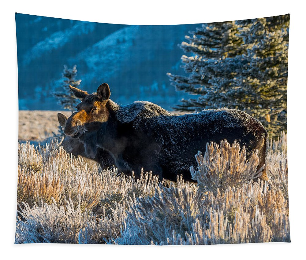 Moose Tapestry featuring the photograph Baby It's Cold Outside by Yeates Photography