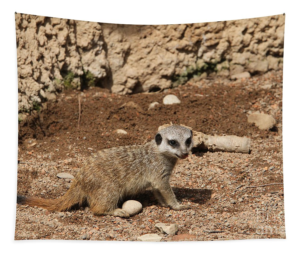 Meerkat Tapestry featuring the photograph Baby Meerkat by Judy Whitton