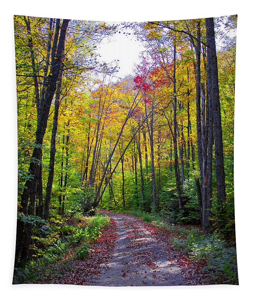 Adirondack's Tapestry featuring the photograph Back Road In The Adirondacks by David Patterson