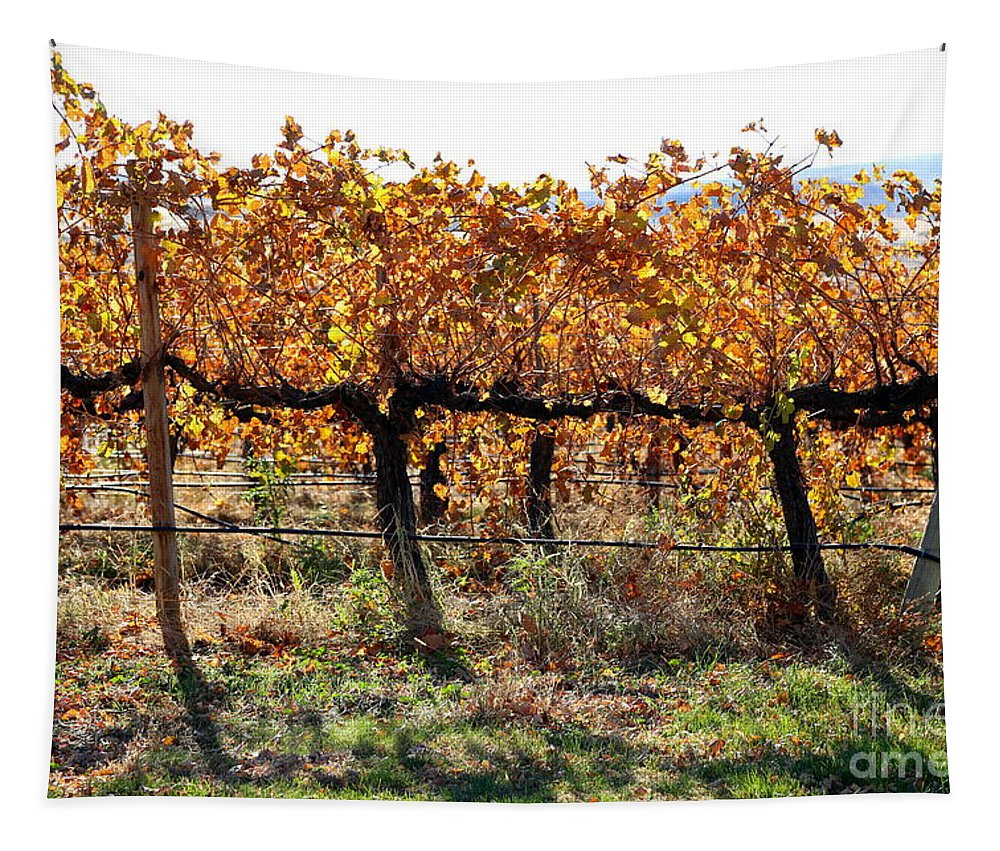 Autumn Tapestry featuring the photograph Backlit Autumn Vineyard by Carol Groenen