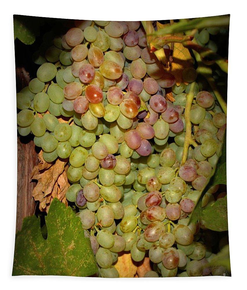 Fruits Tapestry featuring the photograph Backyard Garden Series -hidden Grape Cluster by Carol Groenen